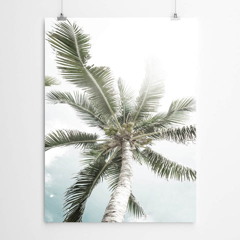 White Tropical Palm Art