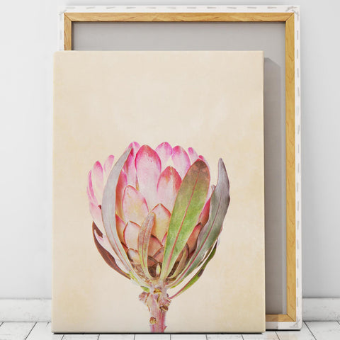 Protea Art Canvas