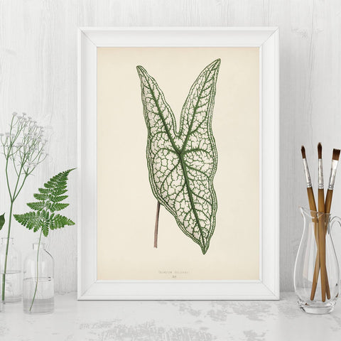 Tropical leaf wall art.