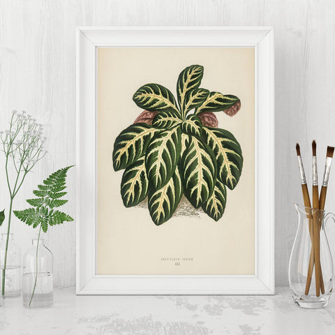 Vintage and antique art prints