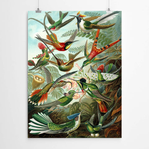 Vintage Bird World Print