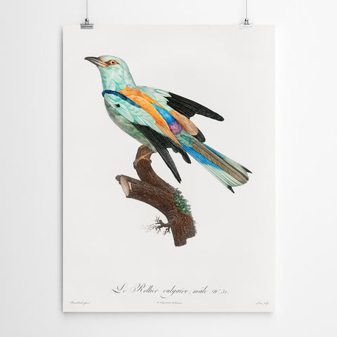 Vintage Bird Wall Art