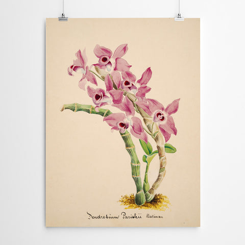 Vintage Orchid Wall Art