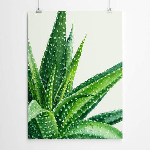 Watercolour Aloe Print