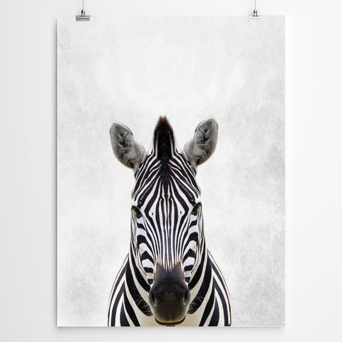 Zebra Fine Art Print South Africa