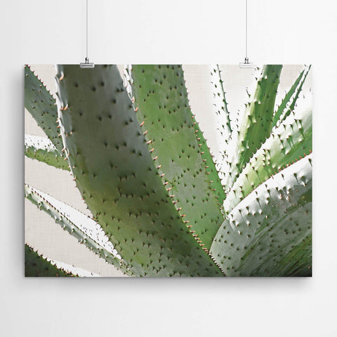aloe wall art prints