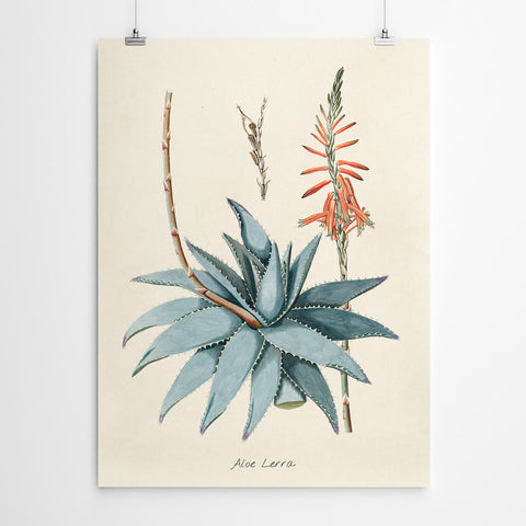 Vintage Aloe Wall Art Print