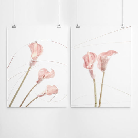 Arum Lilly Wall Art Prints