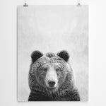 Bear Art Print Cape Town