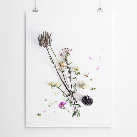 botanical fynbos art