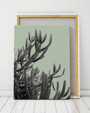 cactus-art-cape-town-artworld