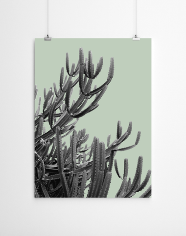 cactus-art-print-niky-rahner-artworld