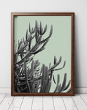 cactus-art-south-africa-niky-rahner