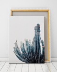 cactus-poster-cape-coastal-artworld