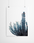 cactus-poster-niky-rahner-art-cape-town