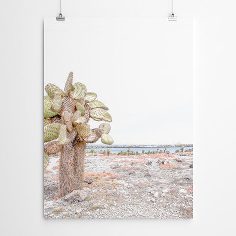 Cactus Landscape Canvas Prints