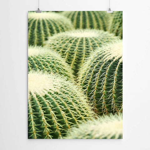Cactus Botanical Photography Art