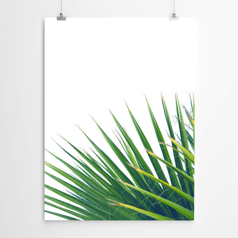 Tropical Fan Palm Art