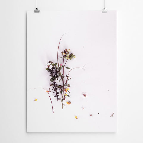 floral wall art fynbos