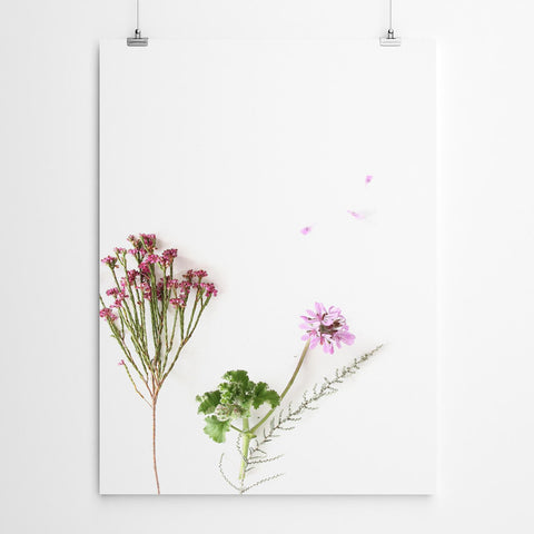 fynbos botanical art