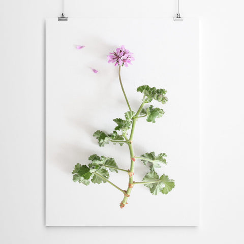 fynbos floral wall art