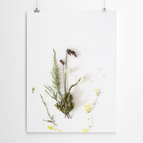 fynbos plant wall art