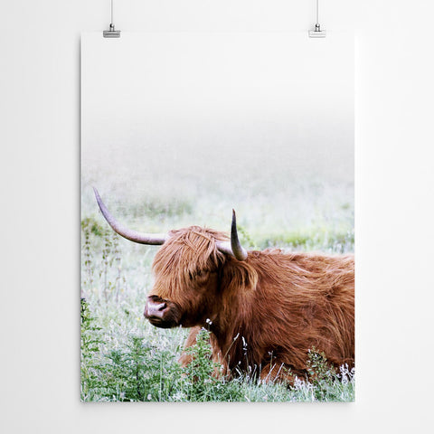 Highland Cow Wall Art