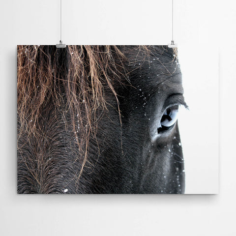 Horse Wall Art Photography Print