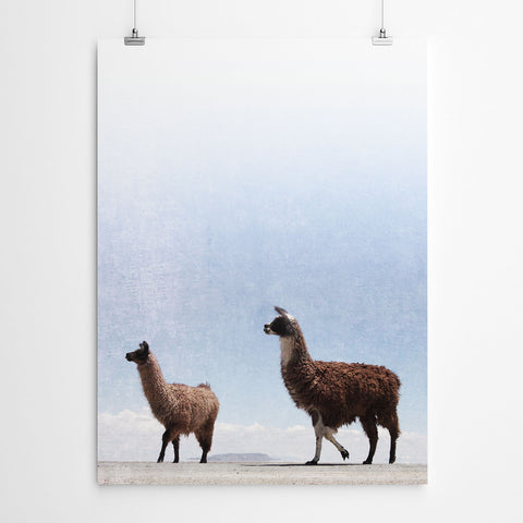 Llama Wall Art Canvas Print