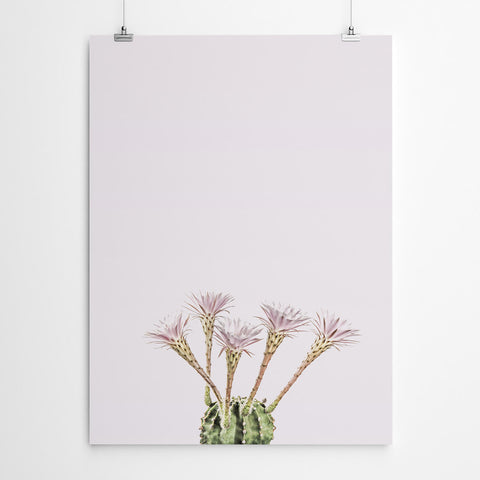 Flowering Cactus Canvas Art