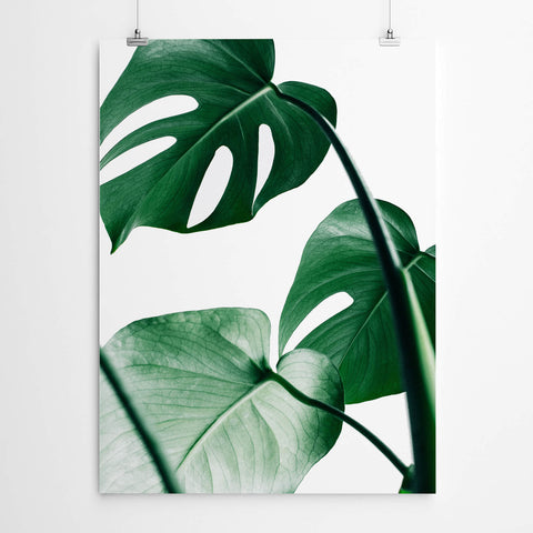 Tropical Monstera Art