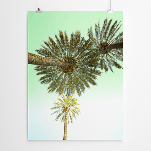 palm-tree-print-cape-town
