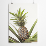 pineapple-photography-printing-cape-town