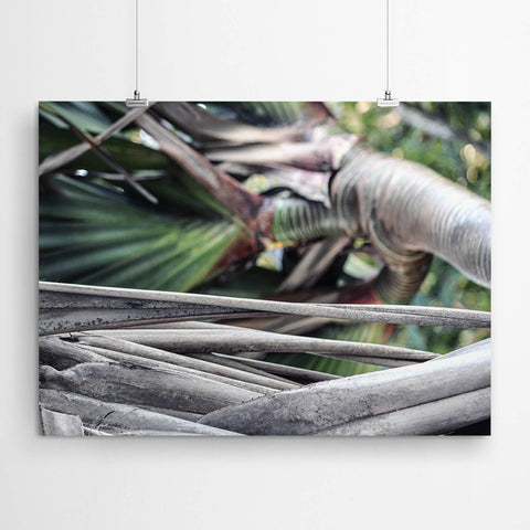 Tropical Nature Wall Art Prints