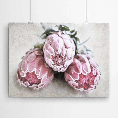 protea flower wall art