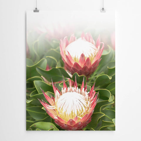 protea wall art south african art