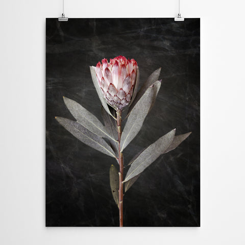 Protea Wall Art
