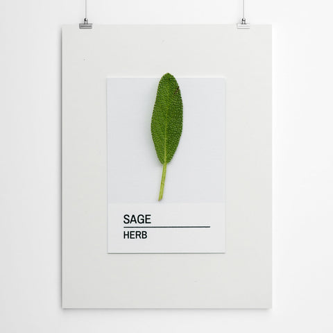 Sage Herb Wall Art Print