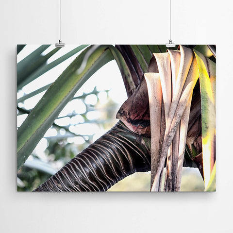Tropical Nature photography Wall Art