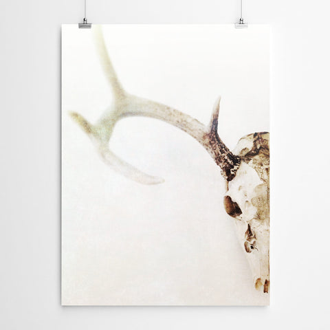 Stag Skull Wall Art