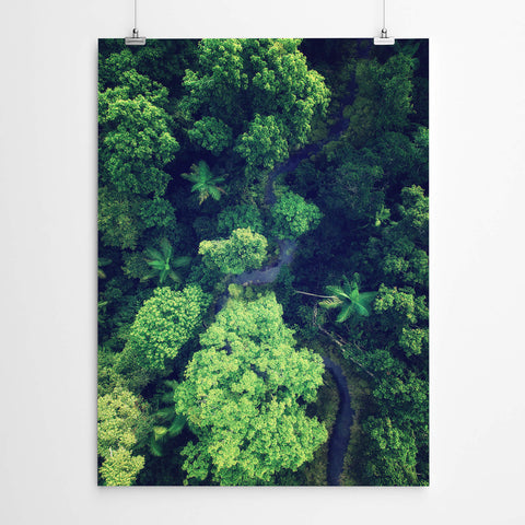 Jungle Photography Print
