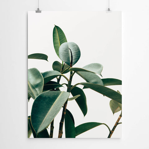 Tropical Plant Art on White