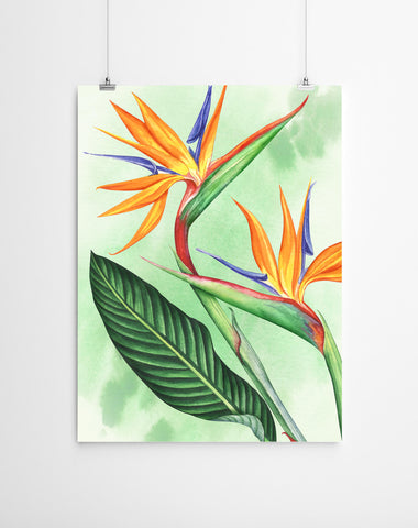 Watercolour botanical Print