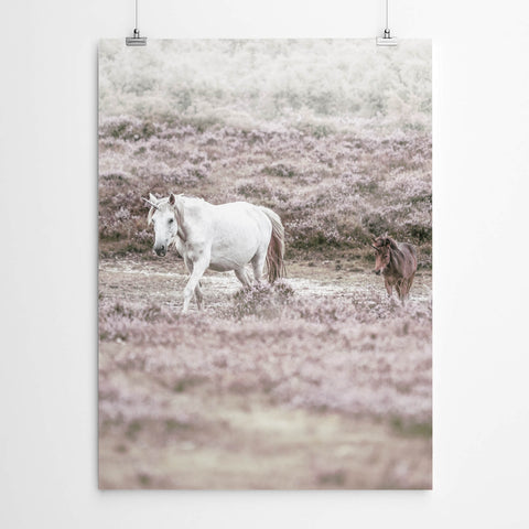 Unicorn Photography Art Print