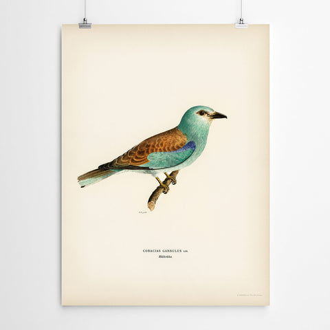 Vintage Watercolour Bird Wall Art