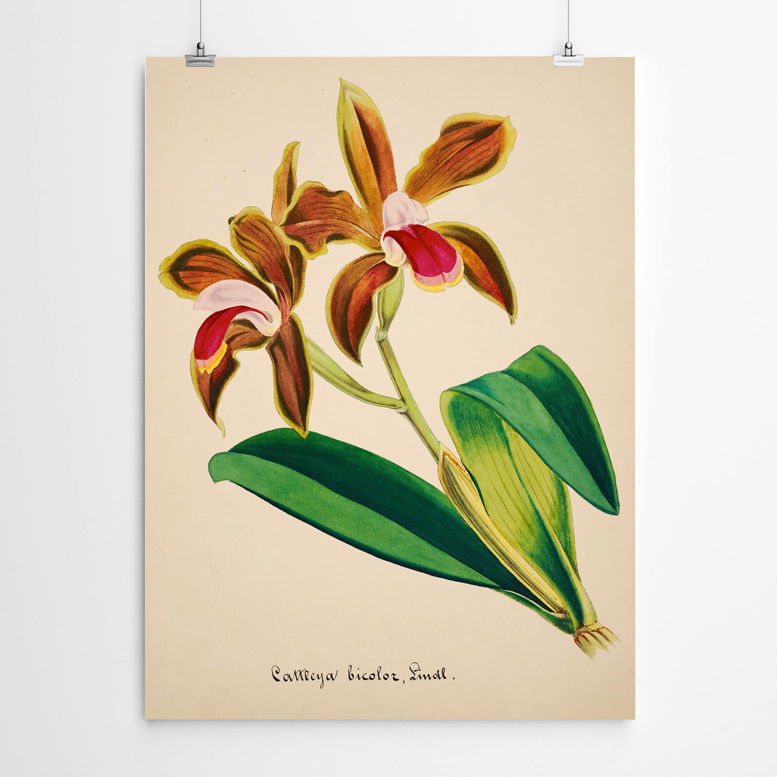 Vintage Botanical Wall Art