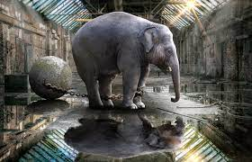 Asian elephant in chains