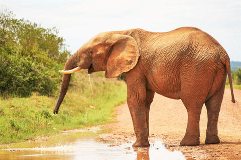 Beautiful elephant at the watering hole in Africa_Photo by Wolfgang Hasselmann on Unsplash