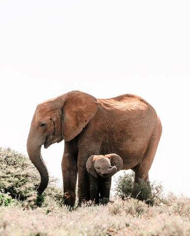 Elephant-with-baby-Photo by Rachel Claire