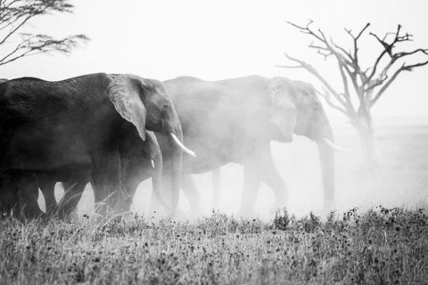 Elephants in the Fog Photo by Leif Blessing from Pexels